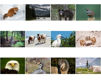 Monthly Scenes of North American Wildlife 2020 Calendar