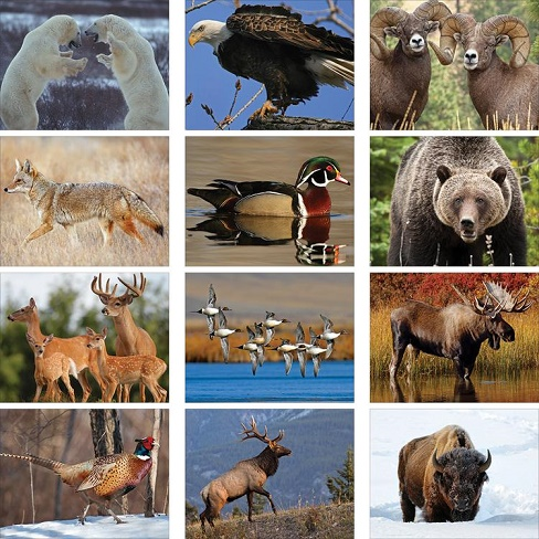 Wildlife 2020 Calendar Monthly Scenes